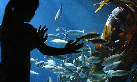 Sea Life Aquarium Plans January Opening at Great Lakes ...