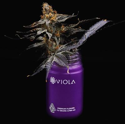 Viola cannabis